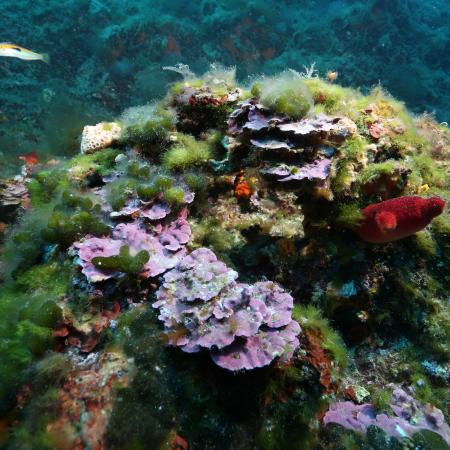 Colorful benthic life of the Mediterranean Sea