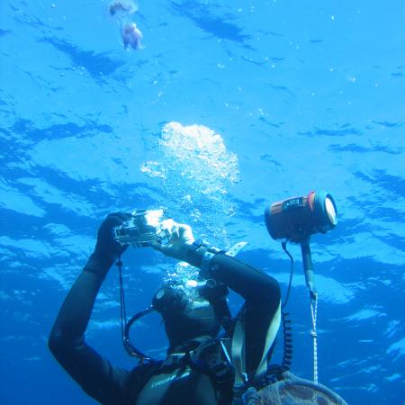 A diver making an observation – Sandrine RUITTON
